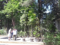 VODACOM AT AUCTION SALE OF SEEDLINGS FOR THE LARGE CITY PARK IN TIVAT
