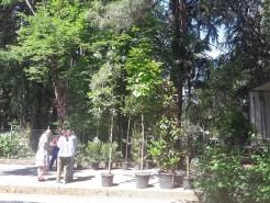 Vodacom na aukcijskoj prodaji sadnica za Veliki gradski park u Tivtu